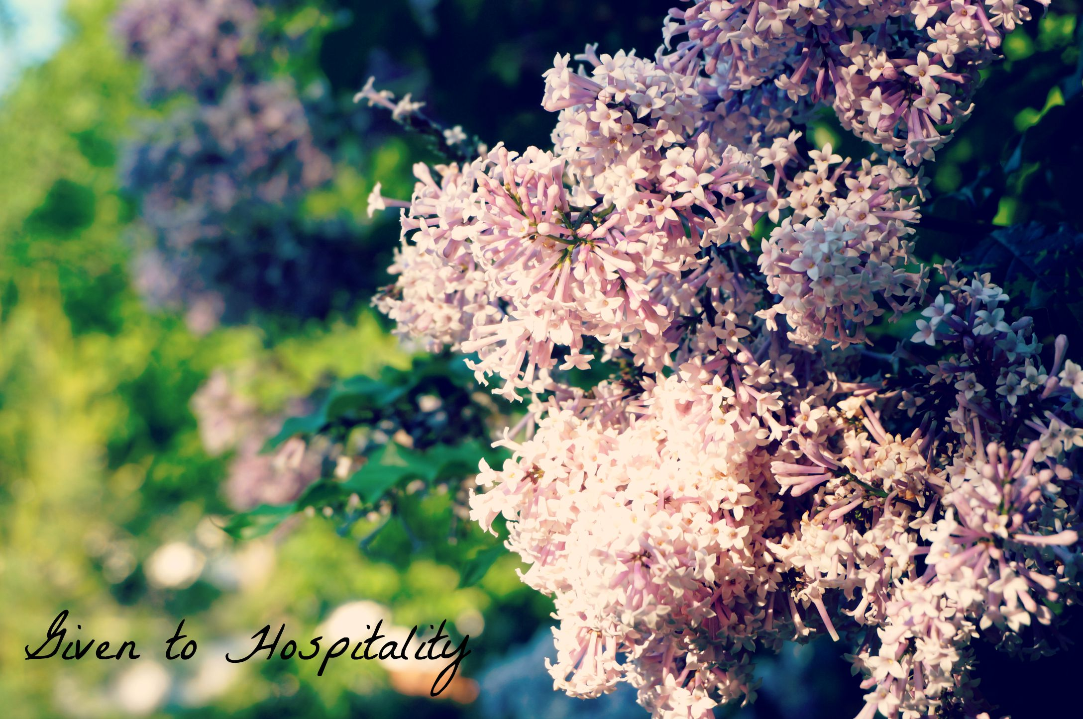 Spring Beauty 2